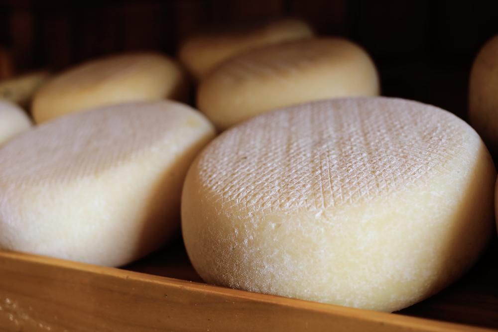 cheese!.jpg