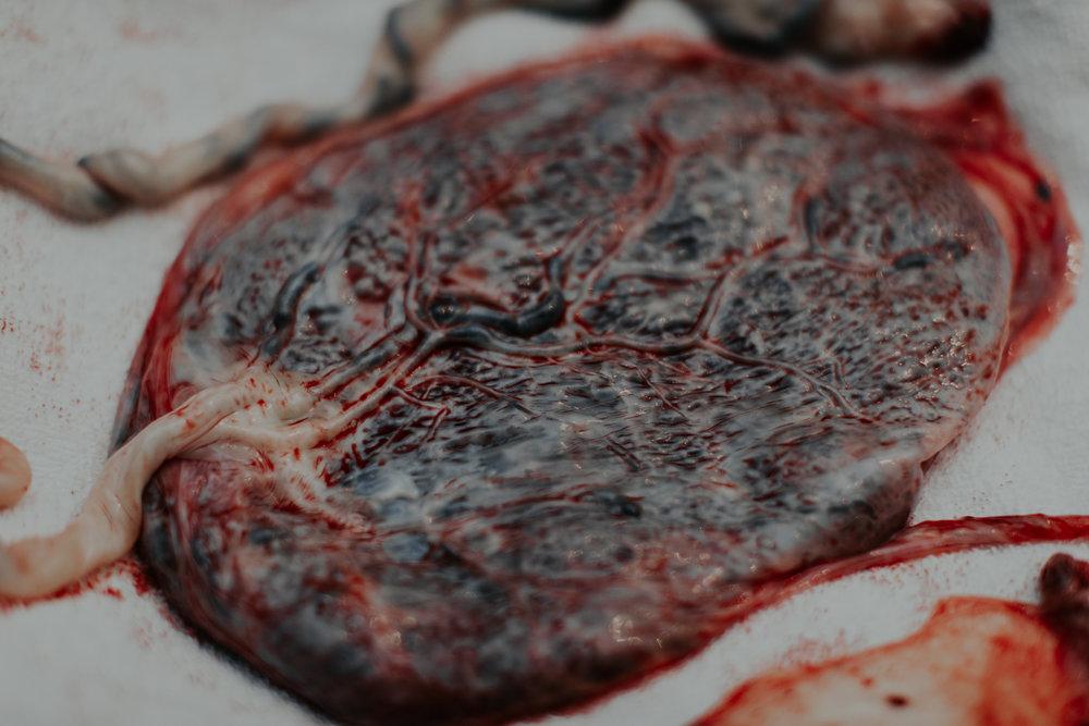 fødselsfotograf-oslo-kongsberg-nyfødtfotograf-maria-vatne-8.jpg
