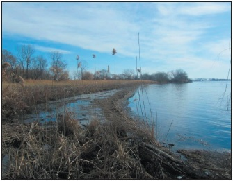 The coastal wetland at Lake St. Clair Metropark includes one of the last examples of natural shoreline on the American side of Lake St. Clair.