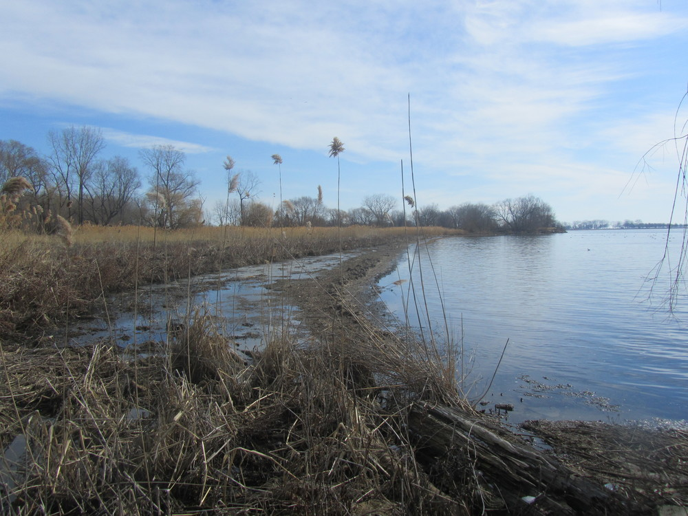 Coastal Wetland - Lk St. Clair.JPG
