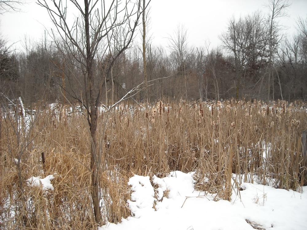 putnam-wetland.jpg