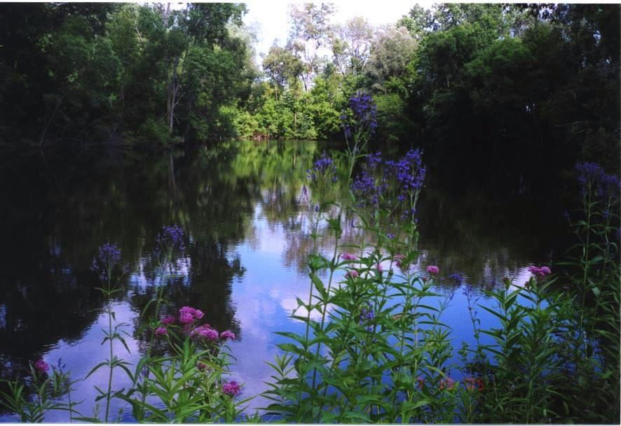 wetland-clinton.jpg