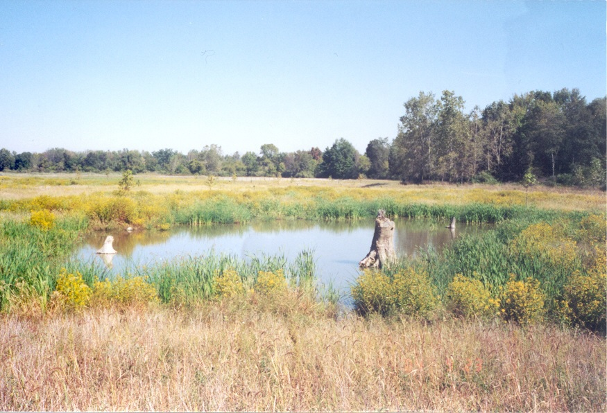 wetland-washington-township.jpg