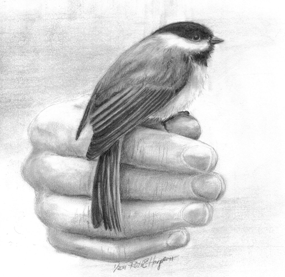 Bird in Hand 2-1.jpg