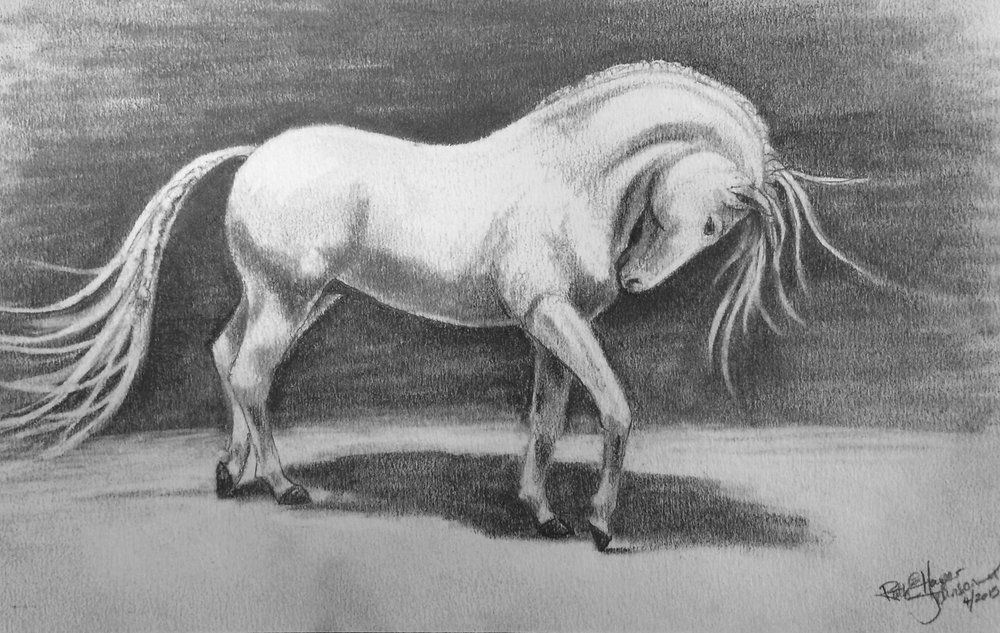 Jan's Horse 2015.jpg