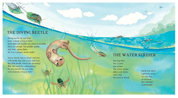 OSTT - Diving Beetle, Water Strider.png