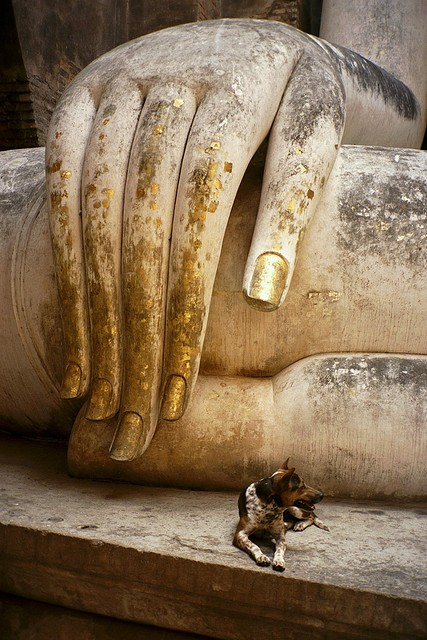 sweetpeapath: perspective… Buddha at Sukhothai with Stray Dog, by becklectic