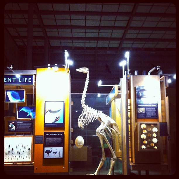 CAL Academy of science. Late night inspiration (Taken with instagram)