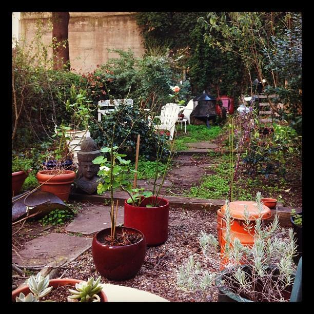 My garden will be missed (Taken with  instagram )