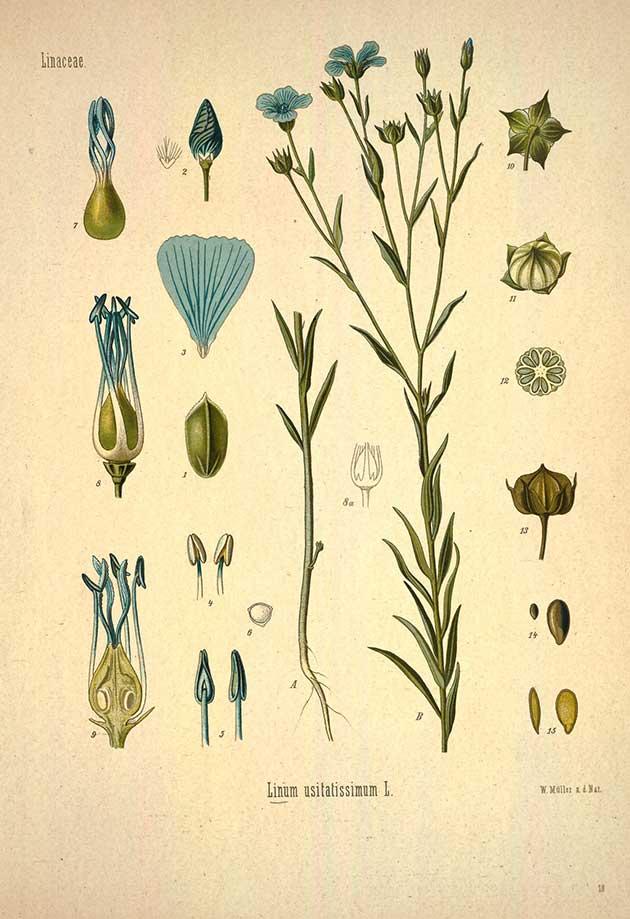medicinal-plants-19.jpg