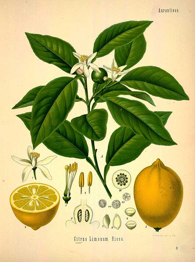 medicinal-plants-5.jpg