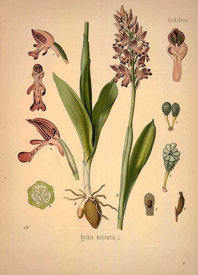 medicinal-plants-65.jpg