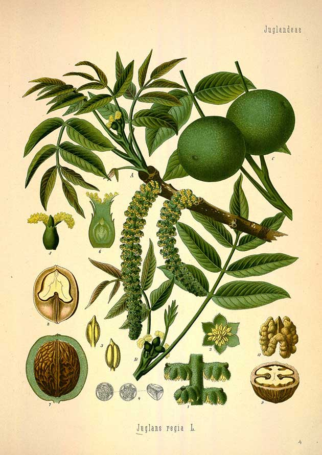 medicinal-plants-6.jpg