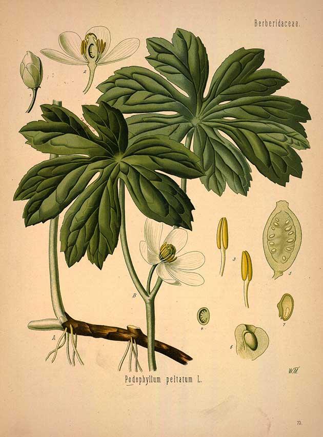 medicinal-plants-77.jpg