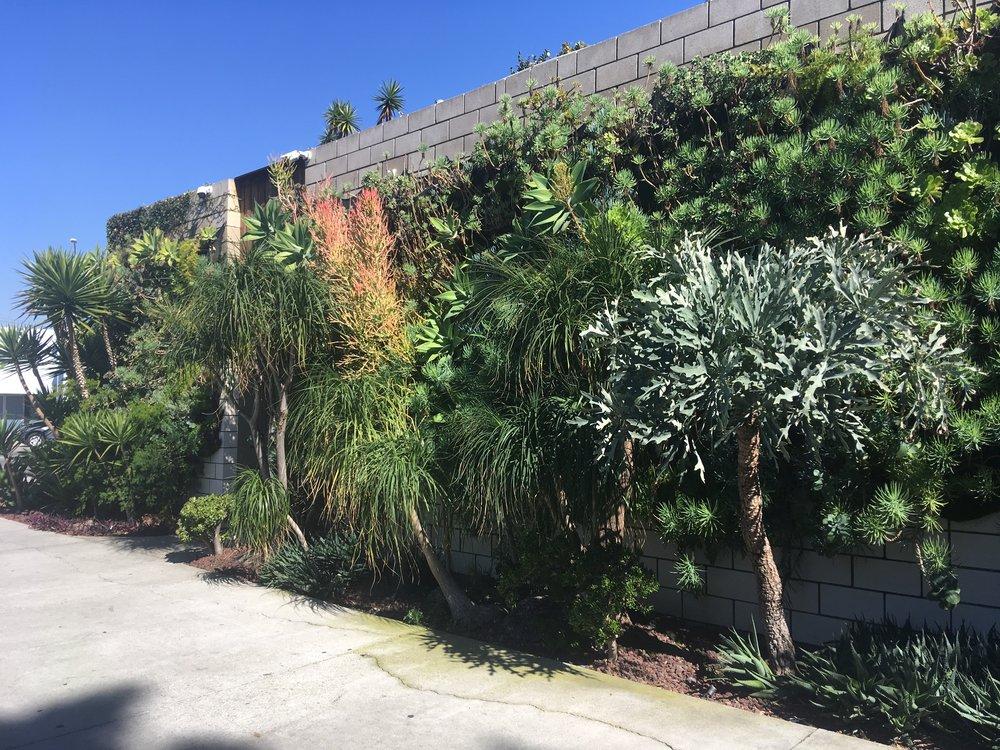 Vertical Garden 1