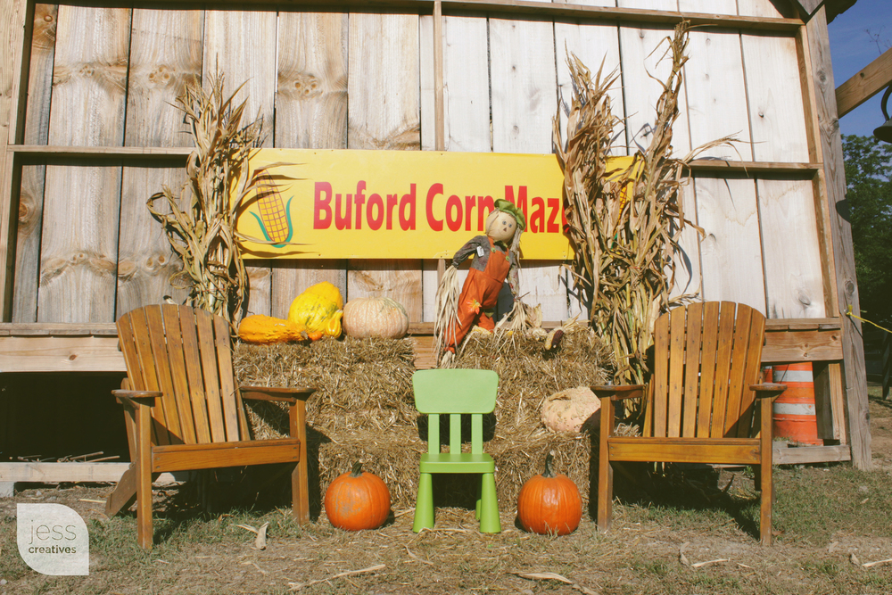 Frank the Chair Visits the Buford Corn Maze