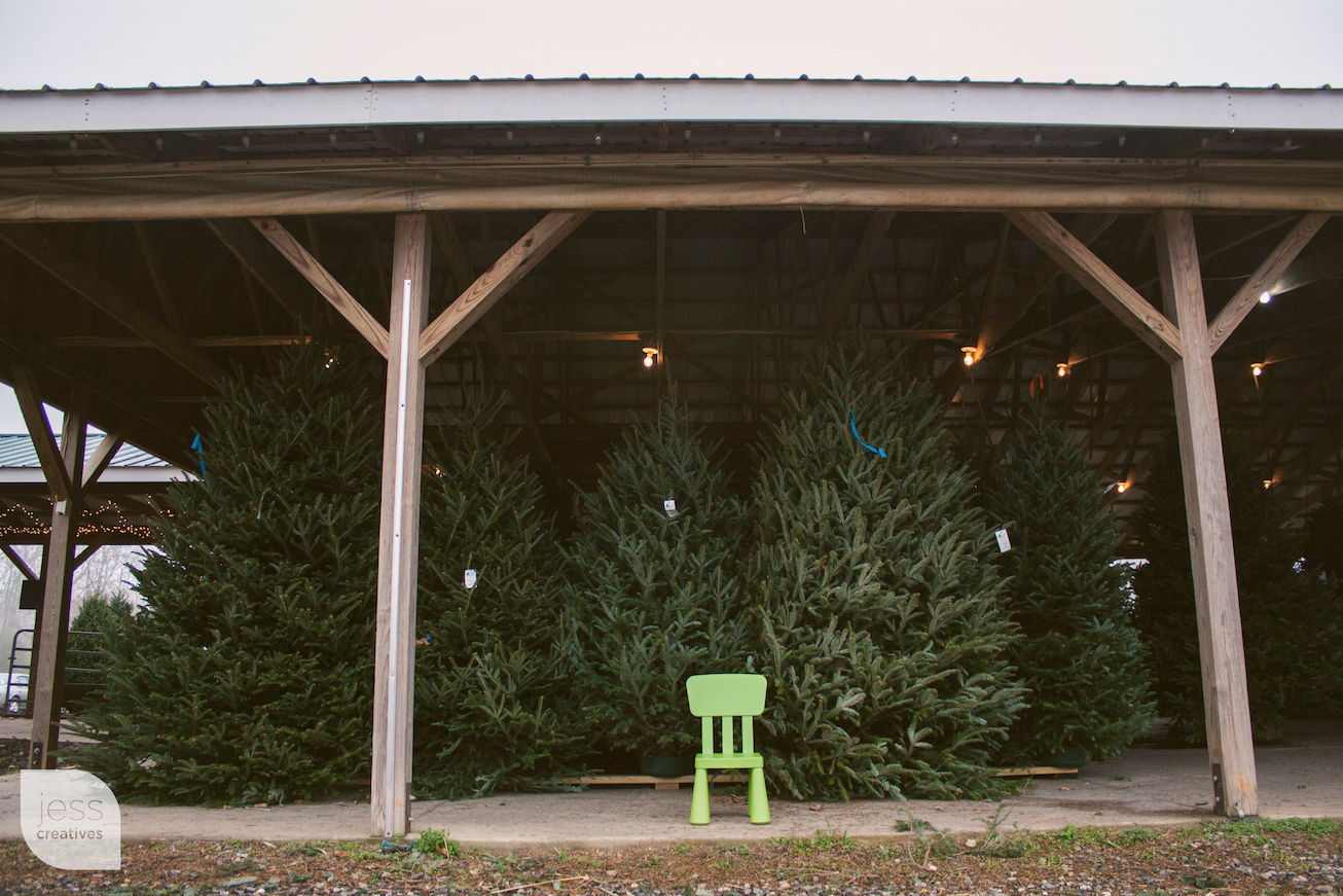 Frank the Chair Visits a Christmas Tree Farm