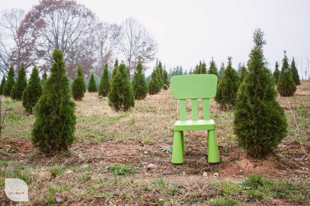 Frank The Chair Visits A Christmas Tree Farm Jess