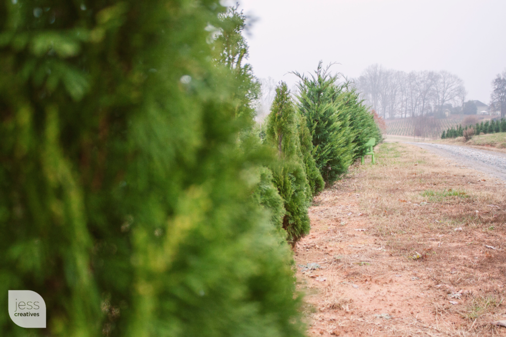 """""""I blend in so easily with Christmas trees, don't I?"""""""