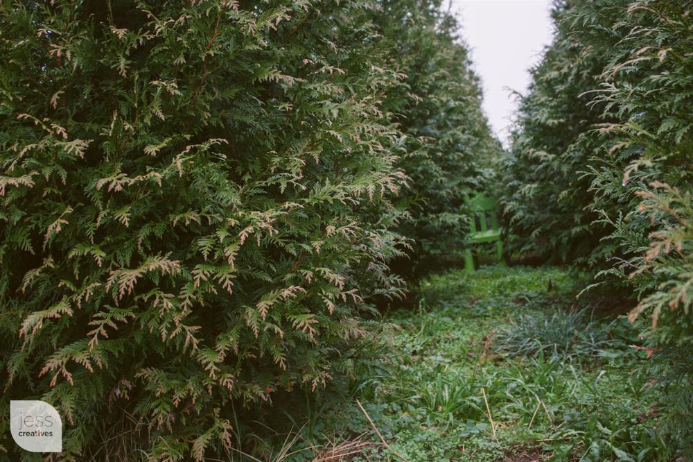 """Christmas trees make the best hiding spots!"""