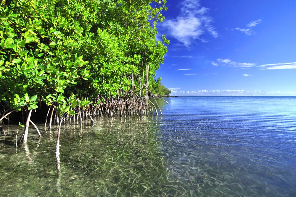 carbon-advantage-mangroves.jpg
