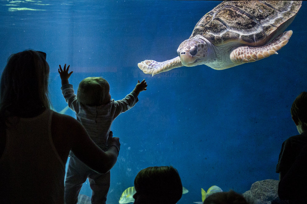 A young guest interacts with a sea turtle at the Birch Aquarium at Scripps Institution of Oceanography in San Diego, California.