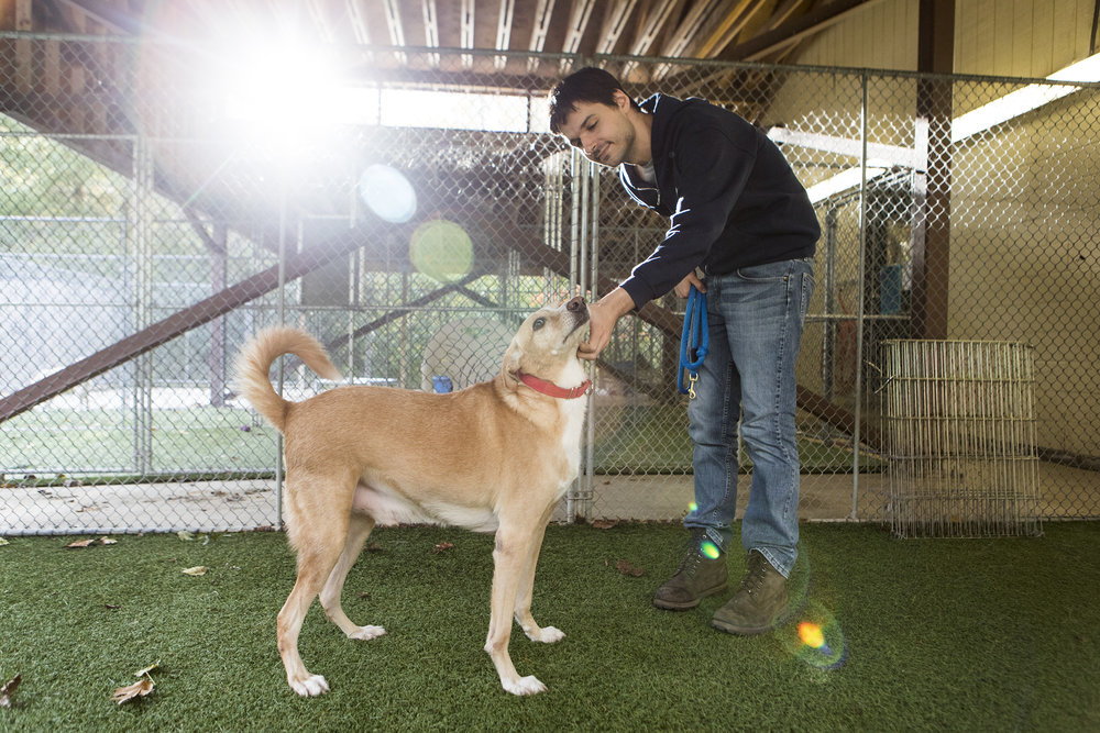 Adoption counselor Michael Radulski pets six year old Lars, one of the four Saluki dogs rescued from Qatar available for adoption, at Buddy Dog Humane Society in Sudbury.