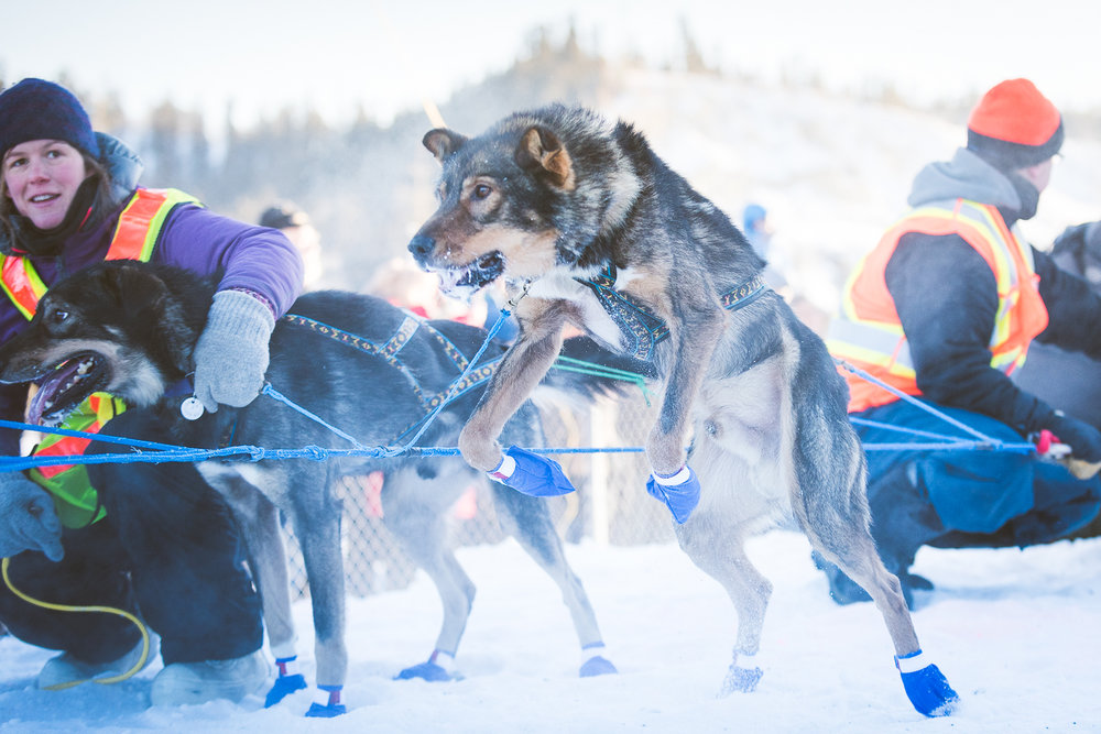 Chance Mclaren Photography_Start_Whitehorse_YukonQuest2017-51.jpg