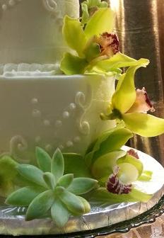 succulent2t.jpg