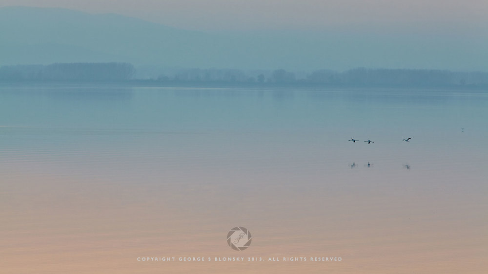 Flamingos in flight over Lake Kerkini at dusk