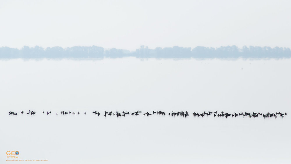 Cormorants waiting on Lake Kerkini for the early morning sunlight to heat the water and force the fish to rise