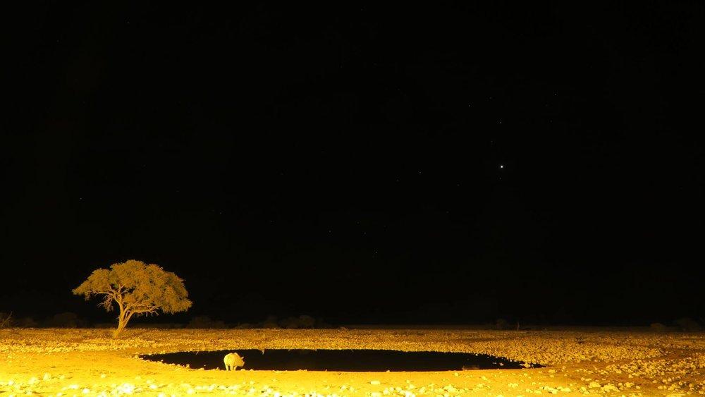 夜の水場にはサイが集まってきました。