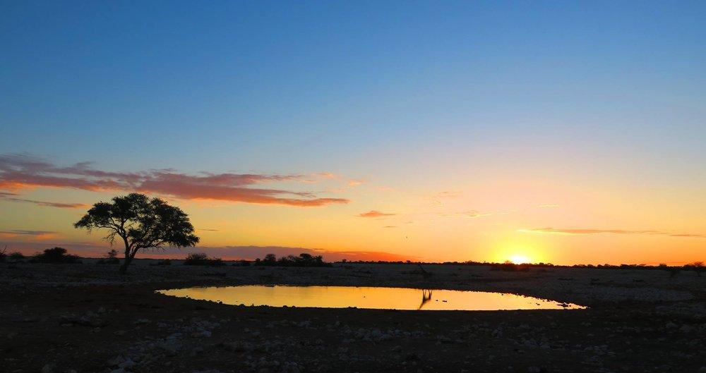この日はホテルの前の水飲み場に沈む夕日。キリンが優雅に水を飲んでいる後ろに日が沈みました。