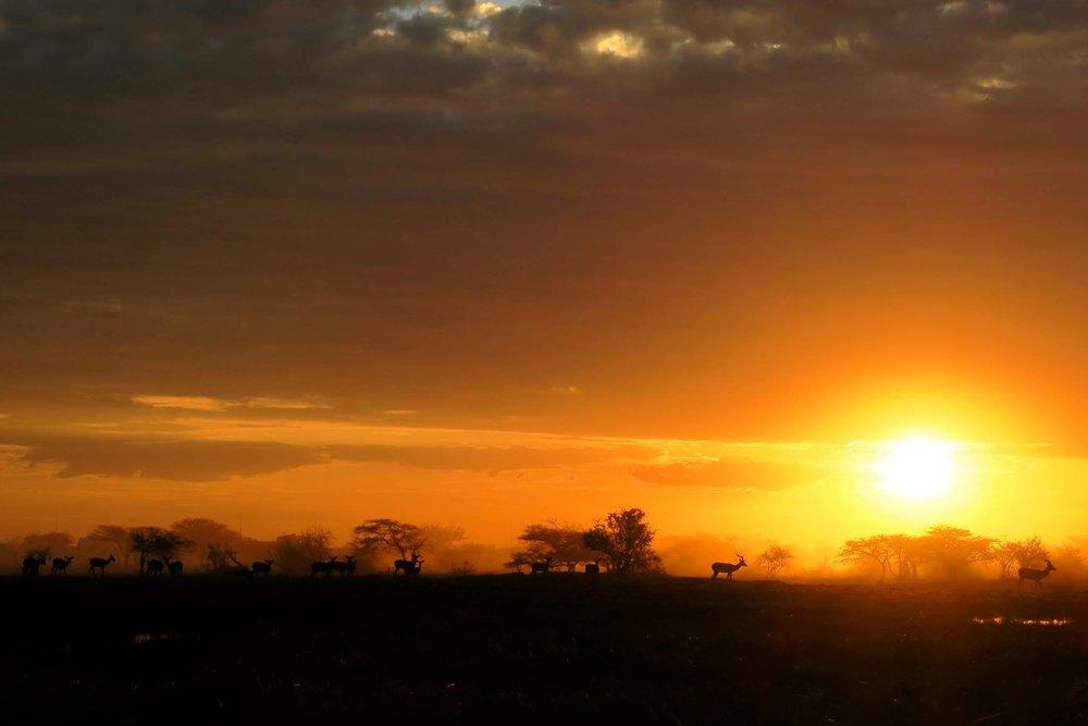 映画かと思うくらい感動した夕日。写真を撮ってくれ!と言わんばかりに夕陽の前に鹿の群れが・・・