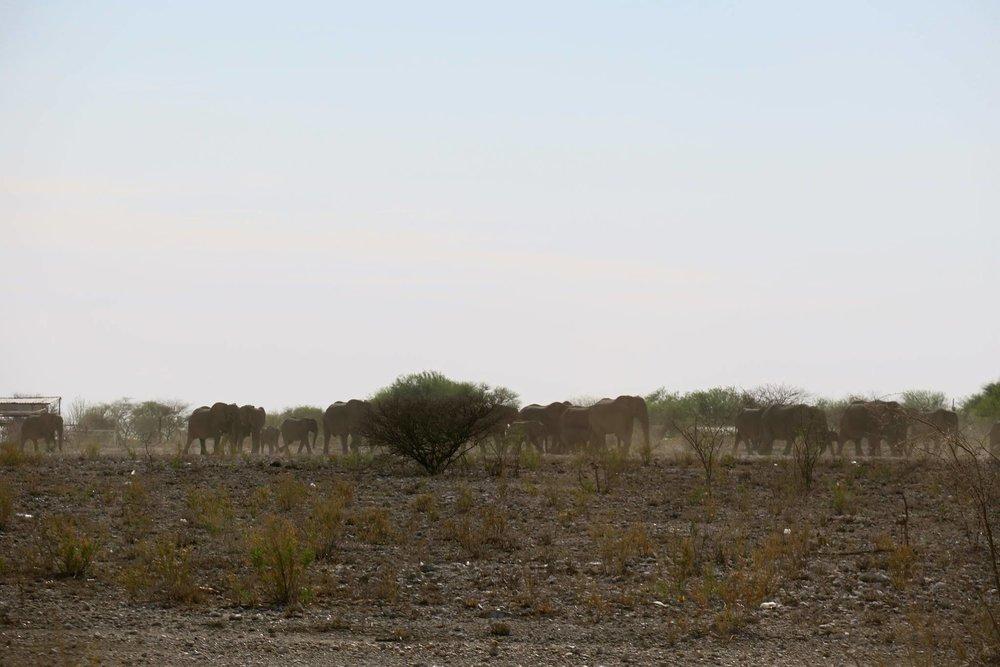 象の群れが目の前を・・・