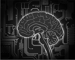 brain architecht.jpg