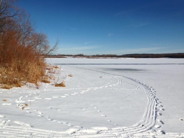 Fish Tracks