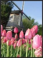 Photo: Pella Historical Village