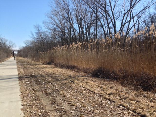 Trailside Grasses