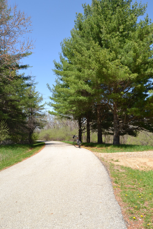 A Corridor of Pine Trees