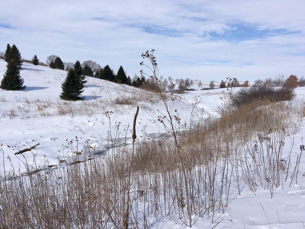 Stream-side Trail