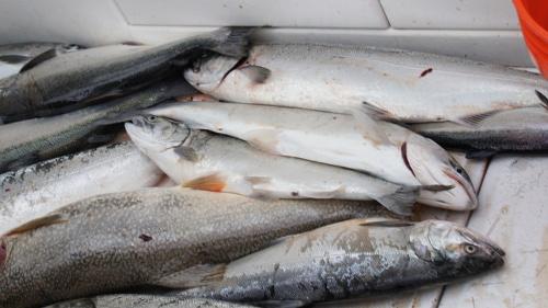 fish_pile.jpg