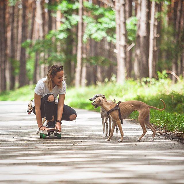 """🌲Veríme, že si leto užívate plnými dúškami minimálne tak ako my! Síce sme ani labky nevytiahli """"z domu"""" nakoľko brázdime okolité lesy, lúky, háje & asfaltky tutó v Čechách, ale že tu je čo obdivovať ľúbiť & nanovo sa zaľúbiť si píšte za ušká, BAF! #petfarmfamily #sušienkašpagetkaškorica #welovedogs #lovemydog #doglover #dogislove #pet #forest #slovakdogs #slovakdog #slovakiadog #czechdog #igerscz #igers #dogs #summer #whippet #whippetlife #whippetlove #greyhound #môjpáničekmaľúbi #menímesvetchlpáčov www.pff.sk♻️"""