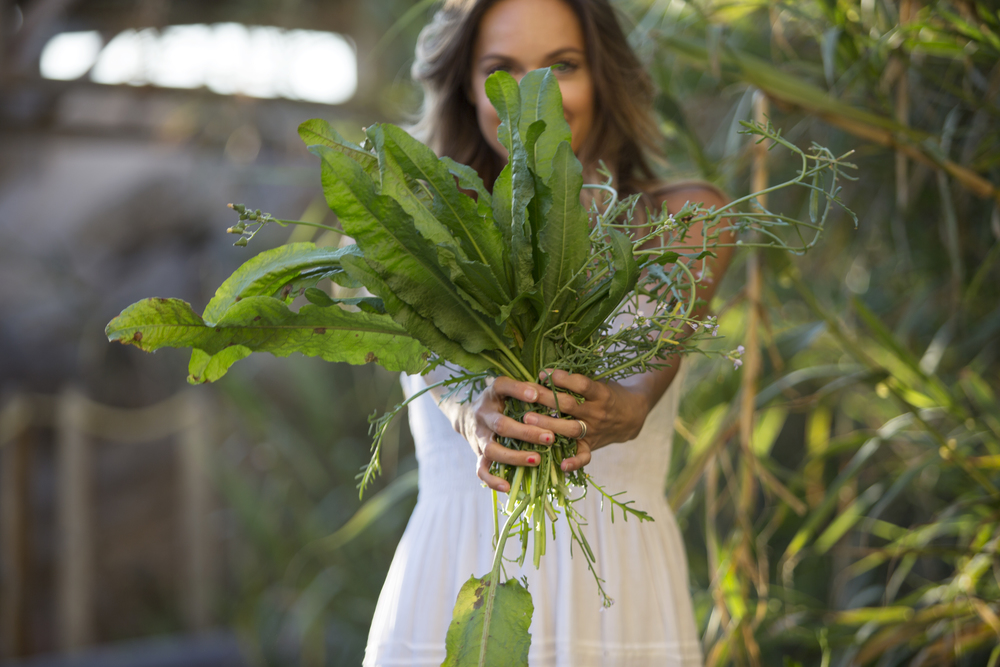 ivy carnegie dandelion