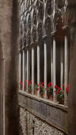 Geranium Arches by Pamela Sayre
