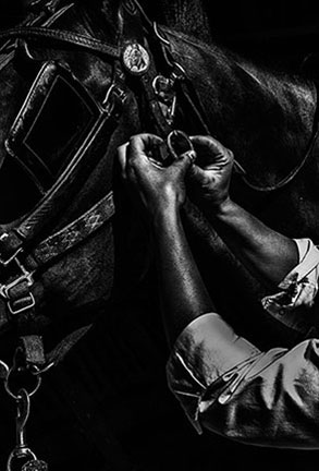 Harness a Horse by John Angus