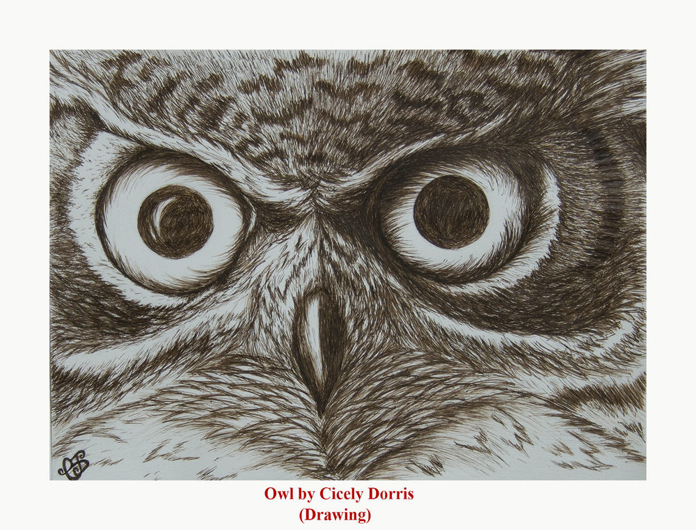 owl-cd-drawing.jpg