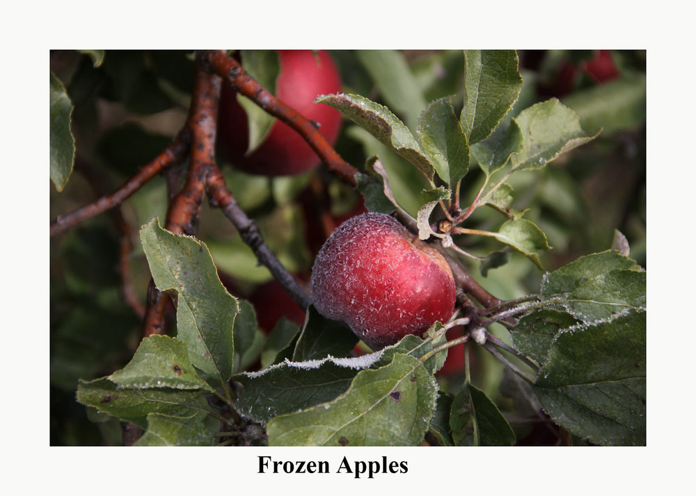 frozen-apples.jpg