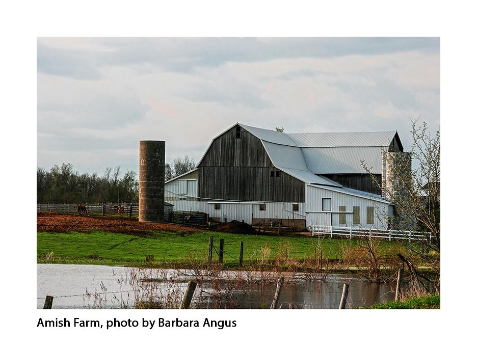 Amish Farm, Barbara Angus copy.jpg