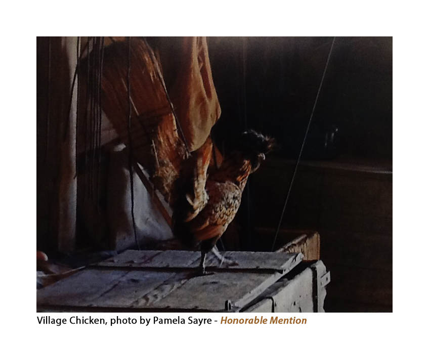 Chicken photo.jpg